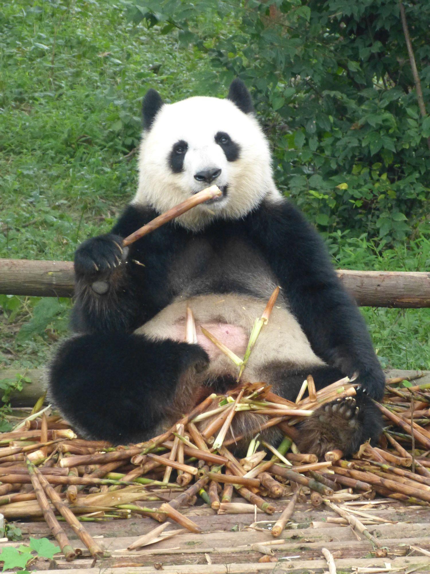 Pandas013