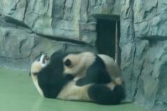 Pandas001