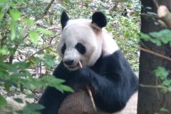 Pandas003