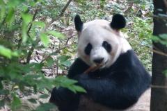 Pandas004
