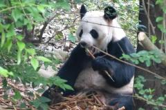 Pandas005