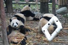 Pandas006