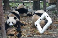 Pandas007