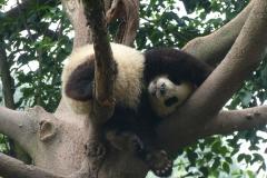 Pandas008