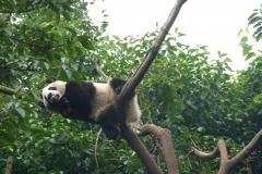 Pandas011