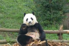 Pandas012