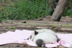 Pandas015