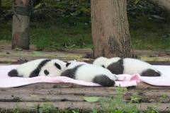 Pandas016