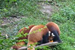 Pandas017