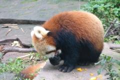 Pandas019