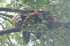 Pandas020