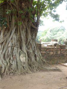 Das Buddhagesicht im Baum.